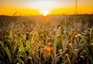 Exportação do agronegócio bate recorde em maio, com US$ 13,9 bilhões