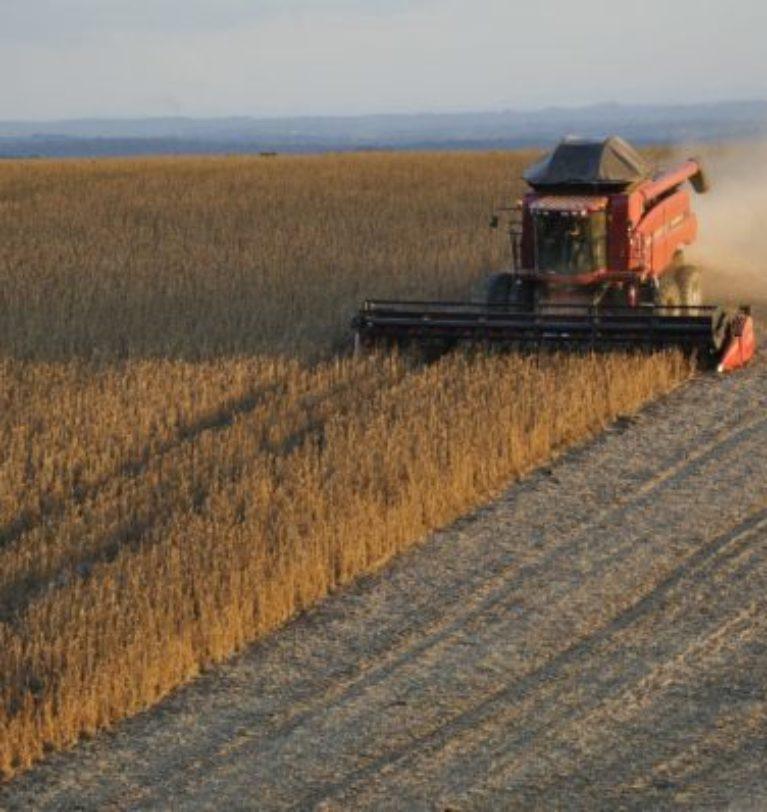 Anec eleva previsão de exportação de soja, mas ainda vê queda em junho