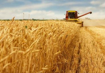 Trigo sobe mais de 1% em Chicago e, ao lado do óleo e puxa futuros da soja
